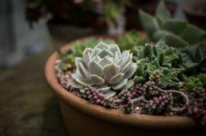 スピリチュアルで疲れている時は植物