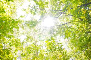 新緑の季節のセルフヒーリング